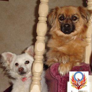 dogs Diabetes Advocacy